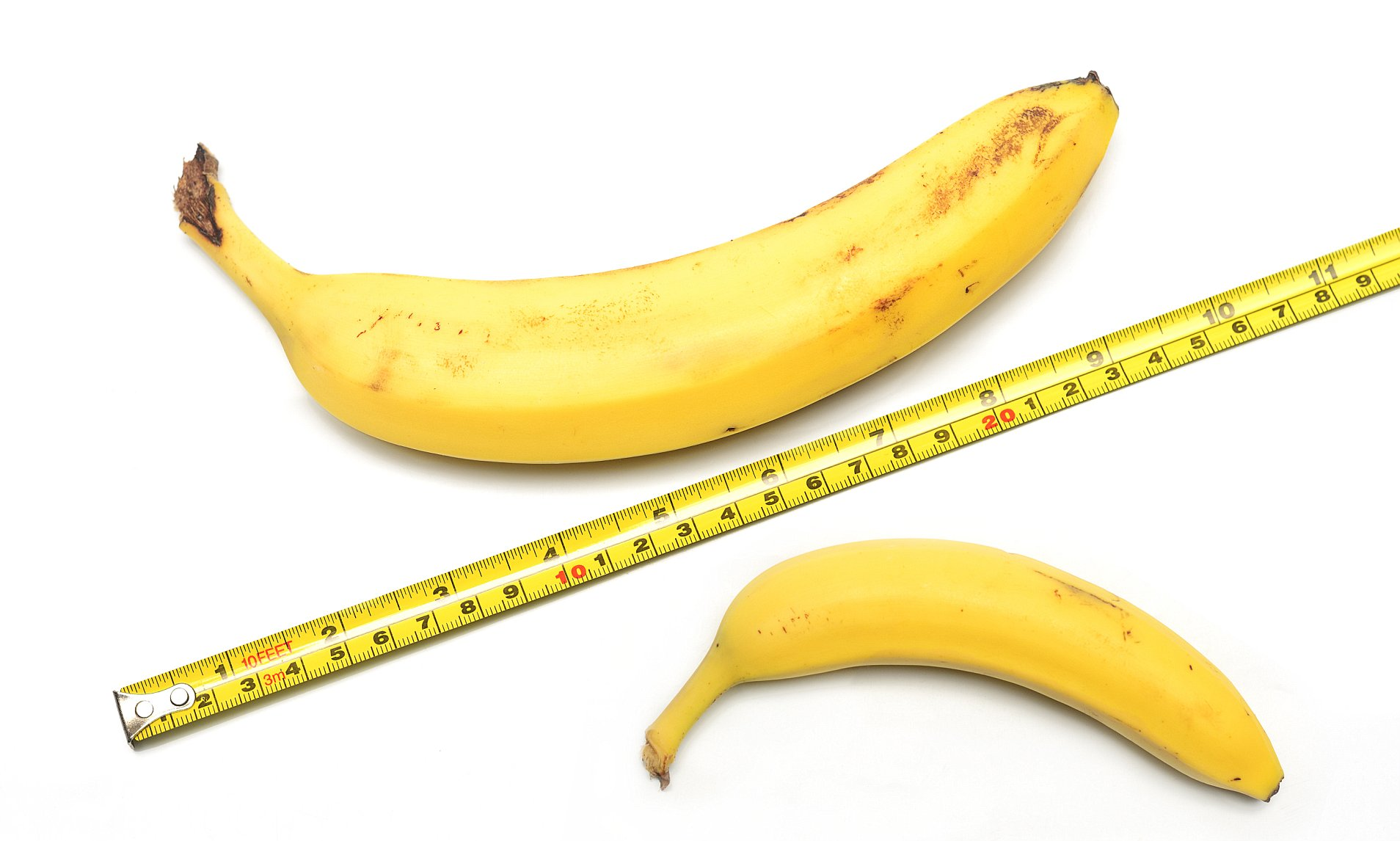a grower penis